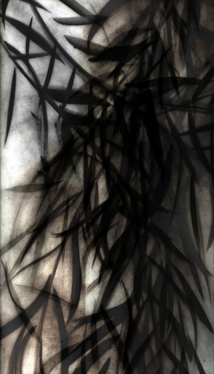 """Black Willow 4"" 2009 Edition of 7 (archival pigment print, 34 x 22"") Private collection."