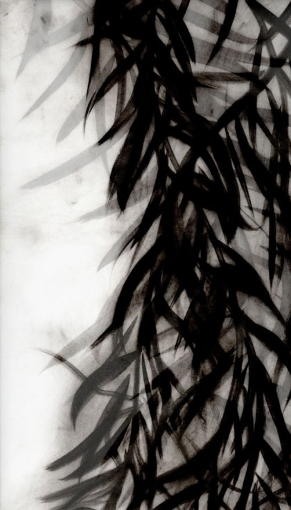 """Black Willow 9"" 2009 Edition of 7 (archival pigment print, 34 x 22"") Private collection."