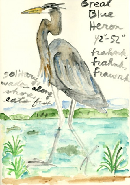 """Great Blue Heron"" (watercolor on paper, 8.5 x 6"")"