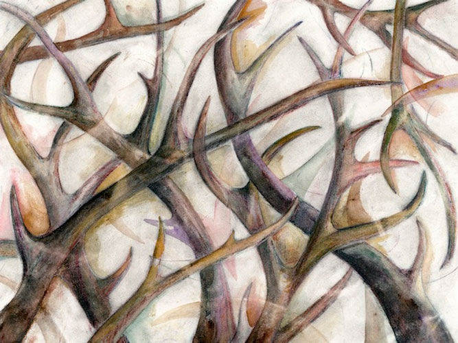 """Antlers"" 2005 (watercolor, colored pencil, and graphite on paper, 22 x 30"") Private collection."