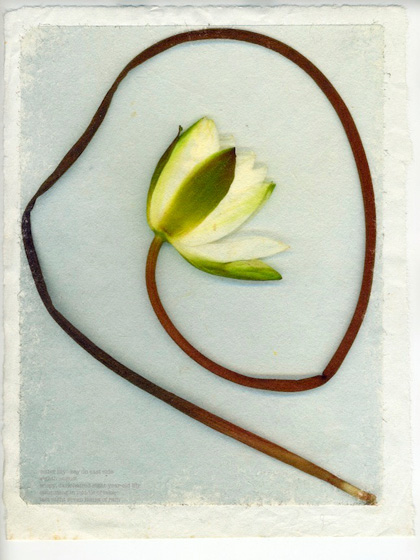 """Water Lily"" 2004 (mixed media collage on paper, 15 x 12"")"