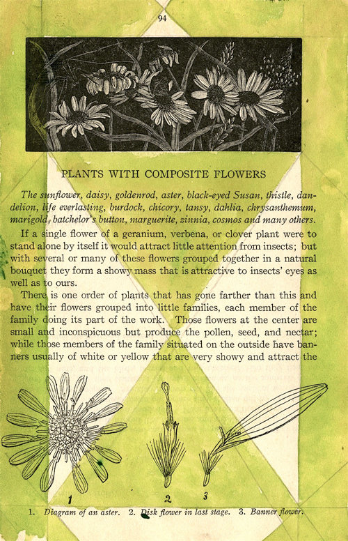 """""""Composite Flowers"""" 2014 (ink and graphite on page of old nature notebook, 7 x 5"""")"""