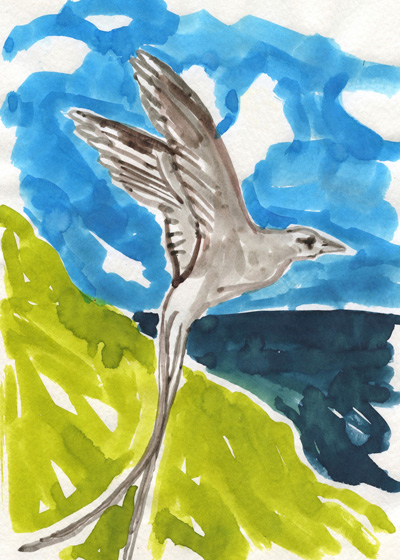 """""""Tropicbirds with their long elegant tails circle the rocky shoreline."""""""